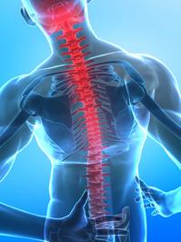 脊椎画像.jpg